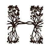 Hyde Beach logo